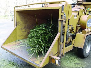 Christmas tree mulcher
