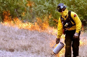 Wildland Fire Team