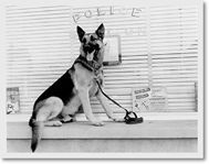 K9 Hans, Littleton's first K9